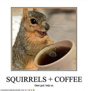 funny-pictures-squirrels-have-discovered-coffee
