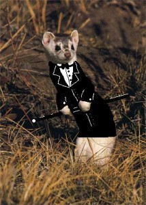 Yes, this picture actually exists. (animalsintuxedos.blogspot.com)